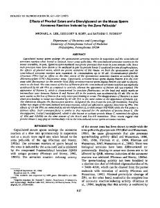 Effects of Phorbol Esters and a Diacyiglycerol on the ... - CiteSeerX