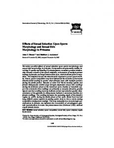 Effects of Sexual Selection Upon Sperm Morphology ... - Springer Link