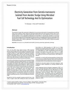 Electricity Generation From Serratia marcescens
