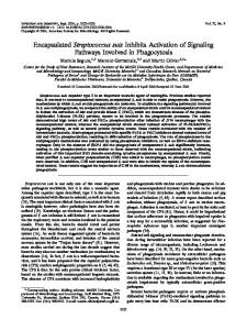 Encapsulated Streptococcus suis Inhibits Activation of Signaling ...