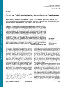 Endocrine Cell Clustering During Human Pancreas ...