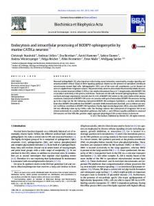 Endocytosis and intracellular processing of BODIPY ...