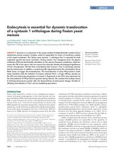 Endocytosis is essential for dynamic translocation of a syntaxin 1 ...