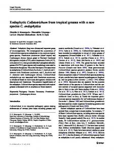 Endophytic Colletotrichum from tropical grasses ...