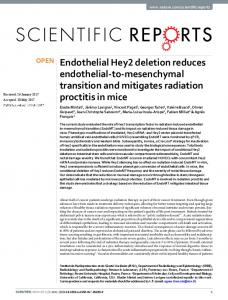 Endothelial Hey2 deletion reduces endothelial-to ...