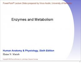 Enzymes and Metabolism - HRSBSTAFF Home Page