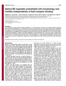 Ephrin-B2 regulates endothelial cell morphology and motility ...