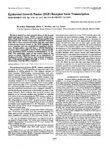 Epidermal Growth Factor (EGF) Receptor Gene Transcription