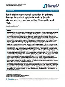 Epithelial-mesenchymal transition in primary