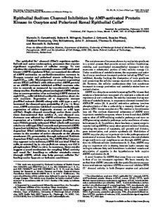 Epithelial Sodium Channel Inhibition by AMP-activated Protein Kinase ...