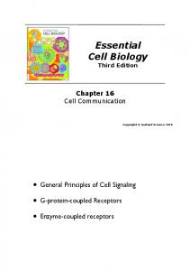Essential Cell Biology - Molecular Cell Biology Lab since 2005