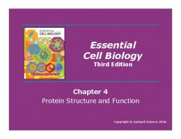 Essential Cell Biology Third Edition