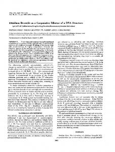 Ethidium Bromide as a Cooperative Effector of a DNA Structure