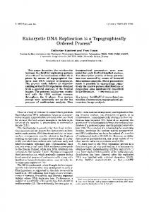 Eukaryotic DNA Replication is a Topographically
