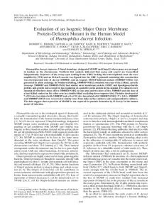 Evaluation of an Isogenic Major Outer Membrane Protein-Deficient ...