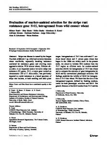 Evaluation of marker-assisted selection for the stripe rust resistance ...