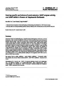 Evening specific oscillations of scent emission, SAMT enzyme activity ...