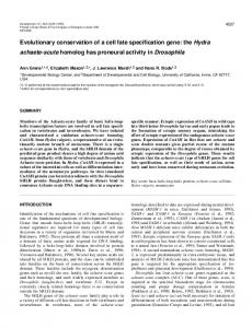 Evolutionary conservation of a cell fate specification gene: the Hydra ...