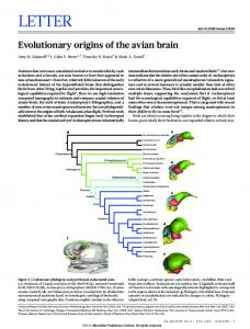 Evolutionary origins of the avian brain