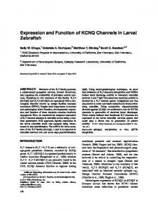Expression and function of KCNQ channels in ... - Wiley Online Library