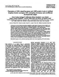 Expression of ABA signalling genes and ABI5 protein levels in ...