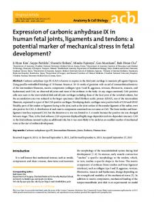 Expression of carbonic anhydrase IX in human fetal joints, ligaments