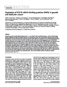 Expression of IGF-II mRNA-binding proteins (IMPs) in gonads and ...