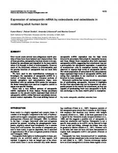 Expression of osteopontin mRNA by osteoclasts and osteoblasts in ...