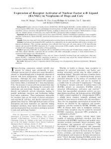 Expression of Receptor Activator of Nuclear ... - Wiley Online Library