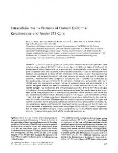 Extracellular Matrix Proteins of Human Epidermal ...
