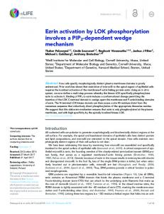 Ezrin activation by LOK phosphorylation involves a