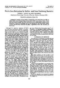Ferric Iron Reduction by Sulfur- and Iron-Oxidizing Bacteria