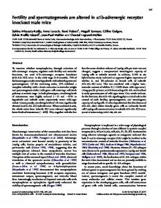 Fertility and spermatogenesis are altered in a1b-adrenergic receptor ...