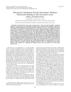 Fibronectin Attachment Protein Homologue Mediates Fibronectin