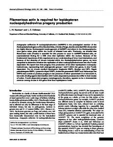 Filamentous actin is required for lepidopteran ... - CiteSeerX