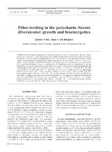 Filter-feeding in the polychaete Nereis diversicolor - Inter Research