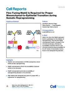 Fine-Tuning Mybl2 Is Required for Proper Mesenchymal ... - Cell Press