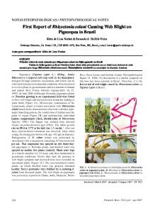 First Report of Rhizoctonia solani Causing Web Blight on ... - Scielo.br
