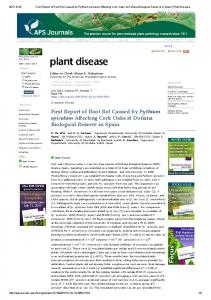 First Report of Root Rot Caused by Pythium spiculum ...
