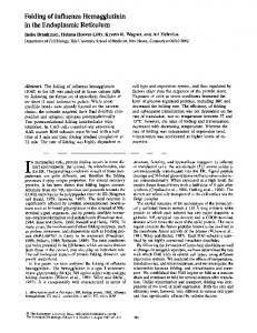 Folding of Influenza Hemagglutinin in the ... - BioMedSearch