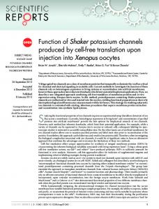 Function of Shaker potassium channels produced by cell-free ...