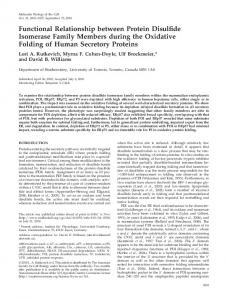 Functional Relationship between Protein Disulfide ... - BioMedSearch