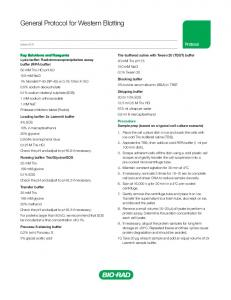 General Protocol for Western Blotting
