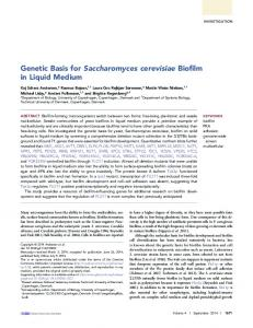 Genetic Basis for Saccharomyces cerevisiae