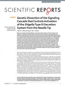 Genetic Dissection of the Signaling Cascade that