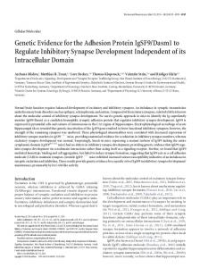 Genetic Evidence for the Adhesion Protein IgSF9