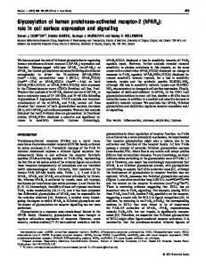 Glycosylation of human proteinase-activated receptor-2 - Europe PMC