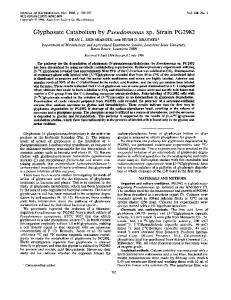 Glyphosate Catabolism by Pseudomonas sp. Strain PG2982