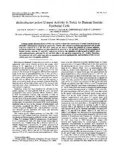 Helicobacter pylori Urease Activity Is Toxic to Human Gastric Epithelial ...