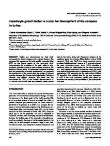 Hepatocyte growth factor is crucial for ... - Wiley Online Library